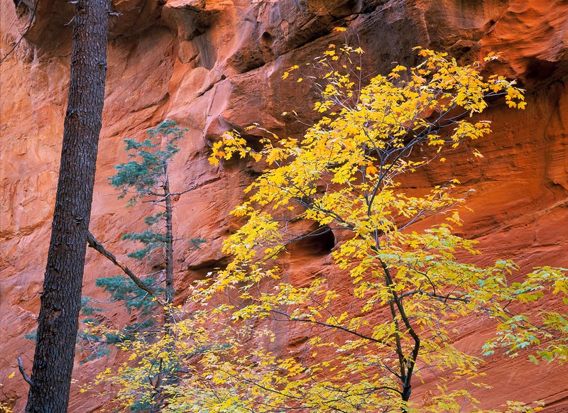 Zion Wall