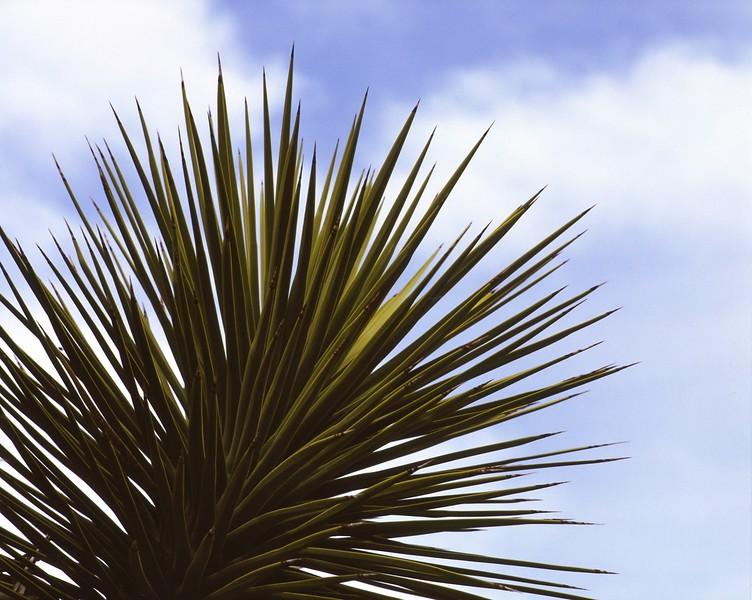 Yucca No  2