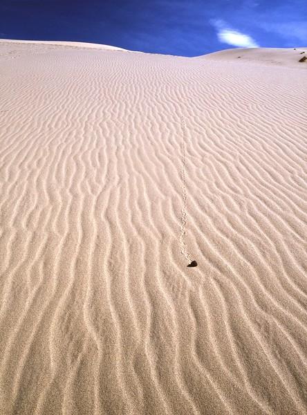 Sand Dune Traveler