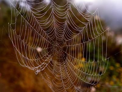 Web - Detail