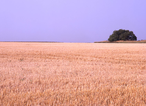 Field Horizon