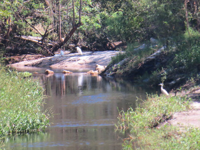 10) 3618 THE WATER HOLE