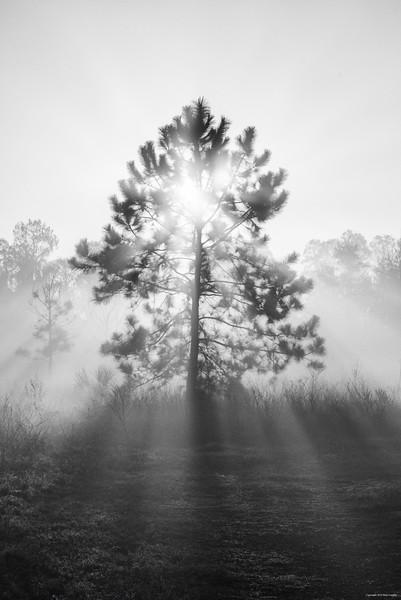sunrise tree_3540bw