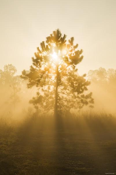 sunrise tree_3540