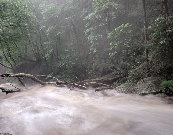 Morning Mist Over a Stream in the Great Smoky Mountains #1