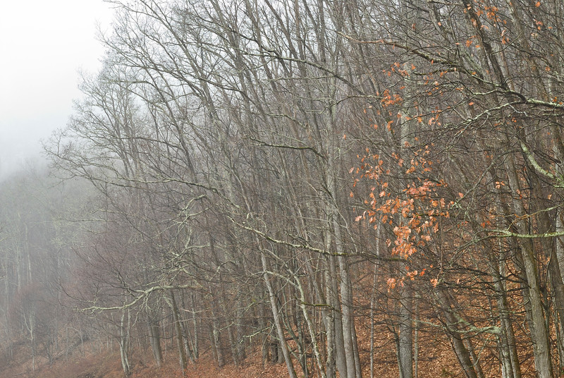 Moody Day on the Blue Ridge Parkway