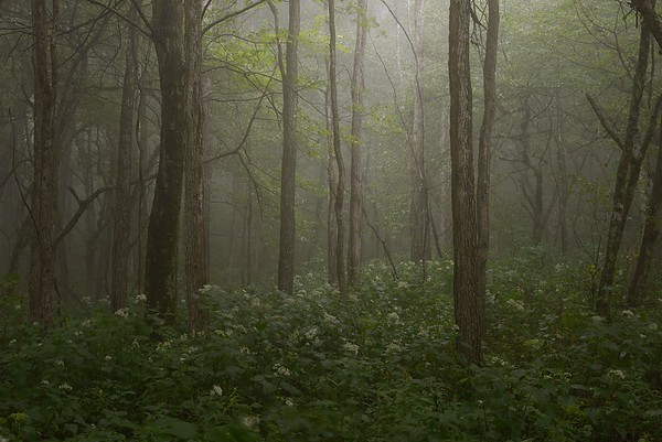 Misty Dell in Great Smoky Mountains National Park