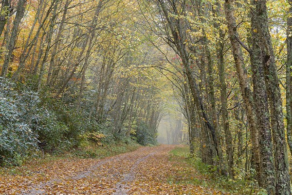 Moody Woods on the Appalachian Trail near Balsam Mountain