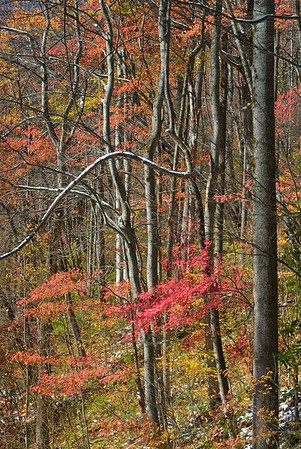 Great Smoky Mountains National Park - Autumn Colors in Snow