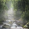 Morning Mist Over a Stream in the Great Smoky Mountains