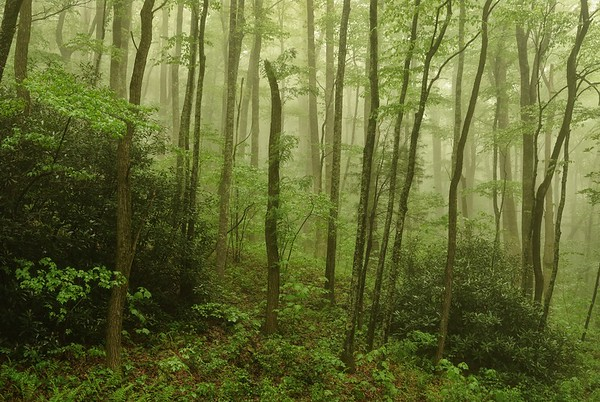 Moody Woods on the Appalachian Trail