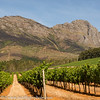 South Africa Wine Country Scenic