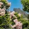 Cape Town South Africa Kirstenbosch