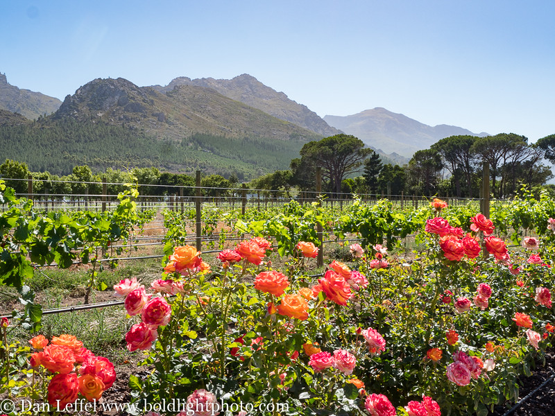 South Africa LaMotte Winery
