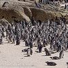 South Africa Boulders Beach Penguins