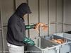 St Johns Newfoundland Crab Catch