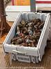 Nova Scotia Lobster Catch