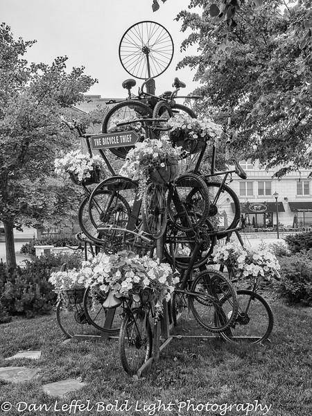 Halifax Nova Scotia Bicycle Tree