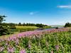 Prince Edward Island Vista