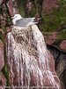 Witless Bay Ecological Reserve Bay Bulls Newfoundland