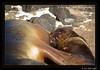 Galapagos_005-7D__MG_2136