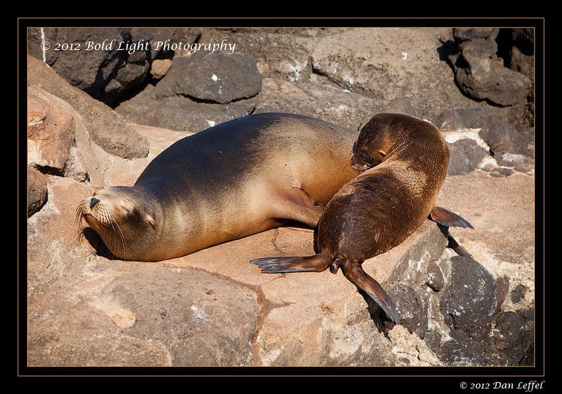 Galapagos_001-5DMK2__MG_6403