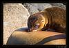 Galapagos_006-7D__MG_2138