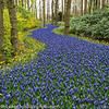 Holland Keukenhof Gardens Forest Path