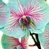 Holland Keukenhof Gardens Orchids
