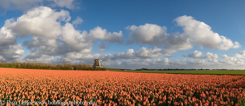 Noord Holland Rural Tulip Fields