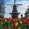 Holland Keukenhof Gardens Windmill