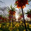 Holland Keukenhof Gardens
