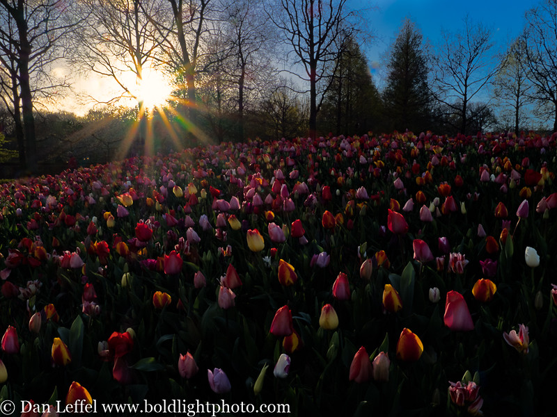 Holland Keukenhof Gardens Sunset