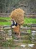 Nepal Lady