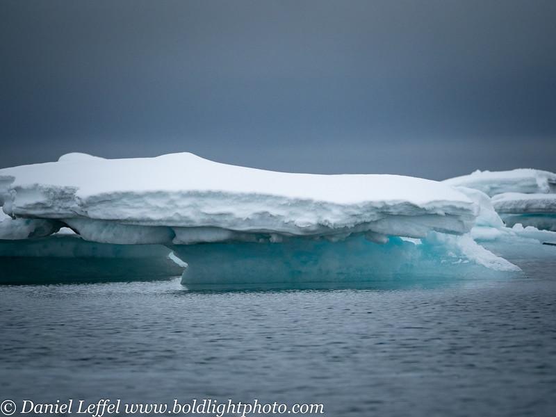 Svalbard Norway Walrus
