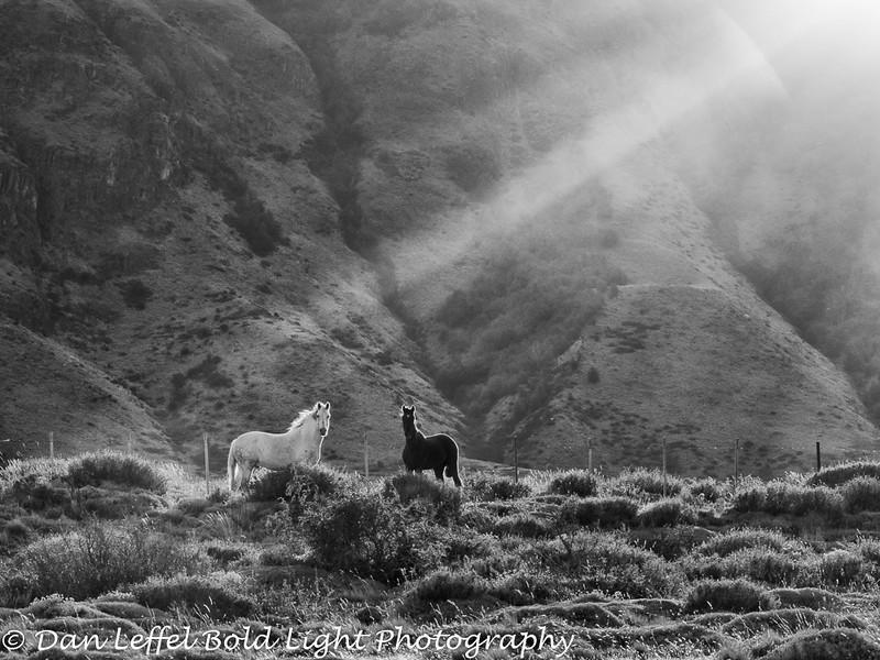 Patagonia Argentina Horses