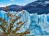 Fall Color at Glaciar Perito Moreno