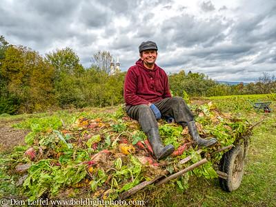 Turnip Field Maramures Romania