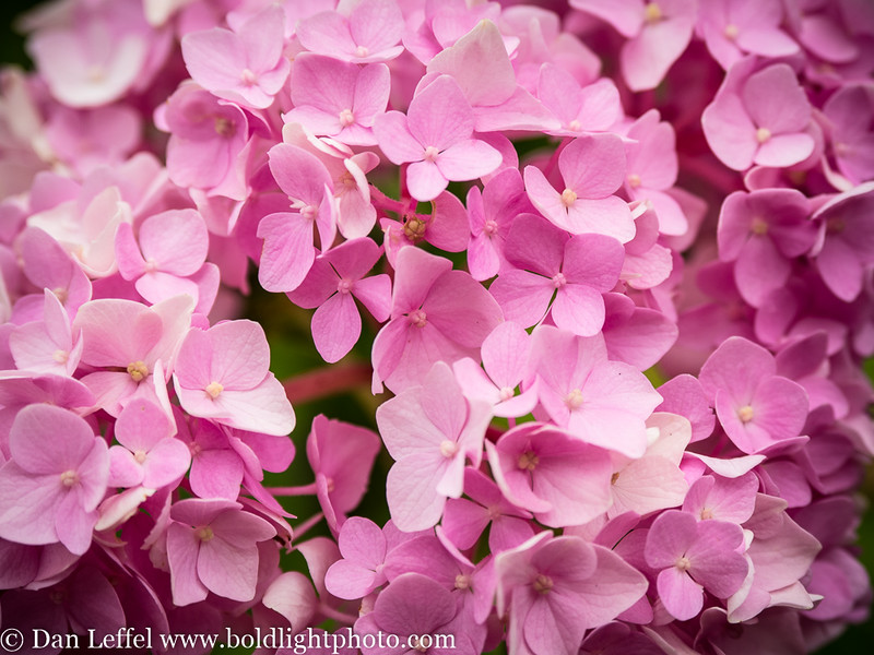 Slovenia Flowers