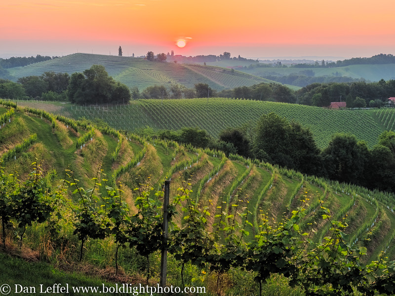 Slovenia Jeruzalem Wine Country Sunrise