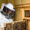 Slovenia Bumble Bees Beekeepeer