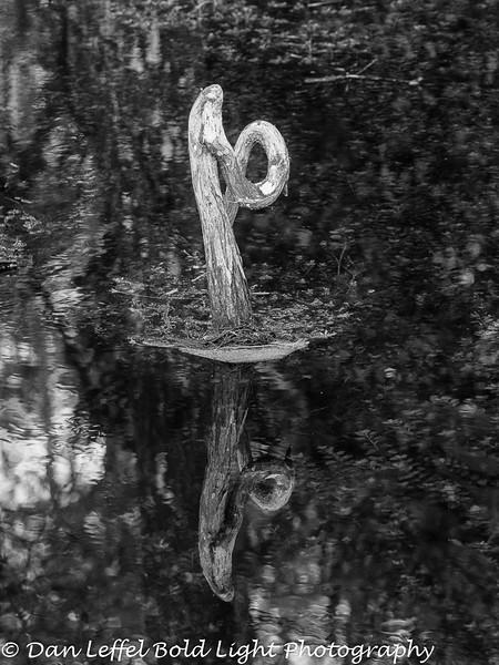 Everglades 2016 005