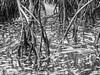 Everglades 2016 025