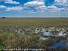 Everglades 2016 021