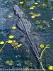 Everglades 2016 015