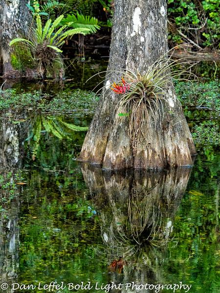 Everglades 2016 004