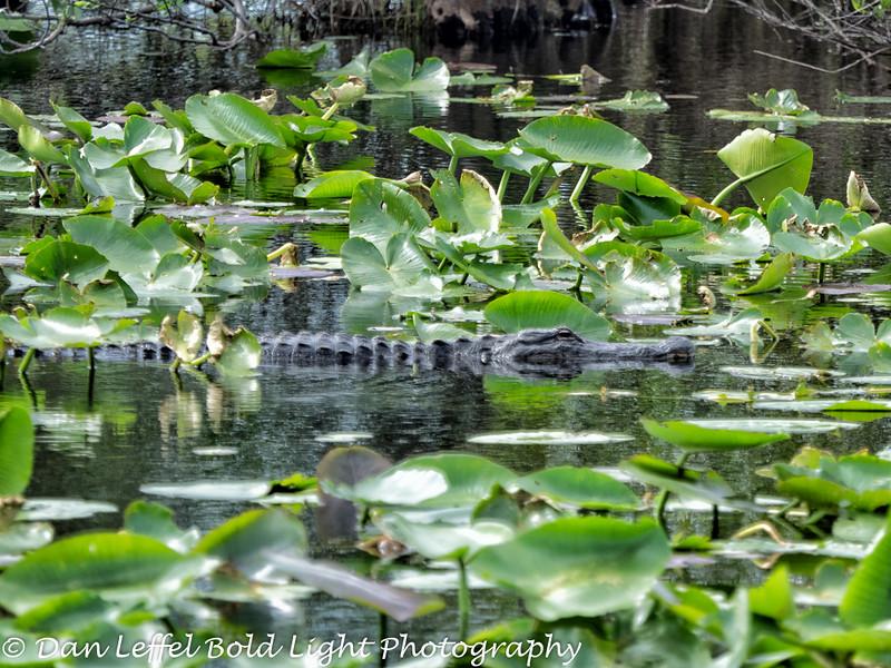 Everglades 2016 013