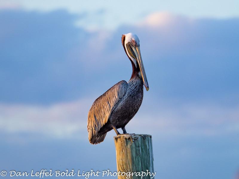 Everglades 2016 030
