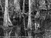 Everglades 2016 006