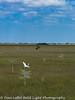 Everglades 2016 022